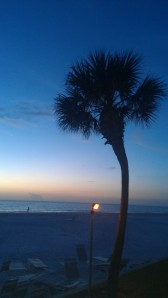 palm tree and dusk
