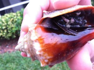 sea shell home