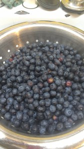 blueberries to freeze