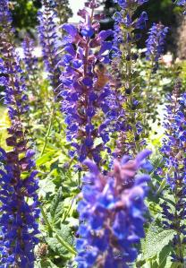 purple flowers by sidewalk with bee
