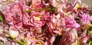 pink petals on sidewalk 2